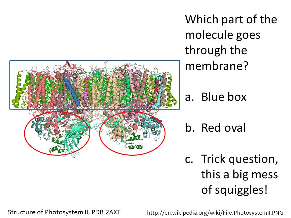 Which part of the molecule goes through the membrane