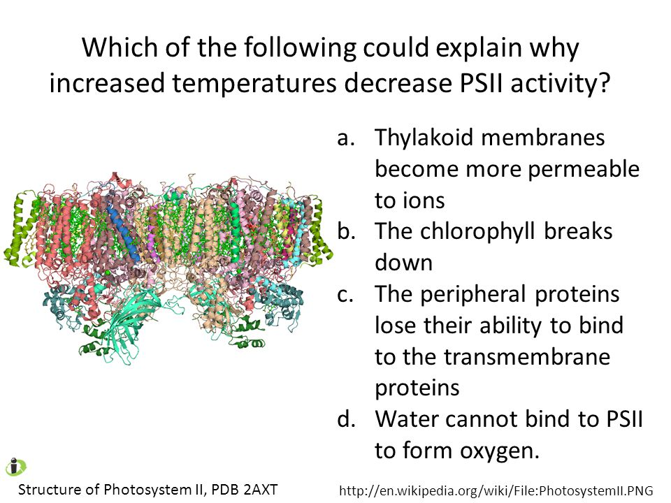 Which of the following could explain why increased temperatures decrease PSII activity