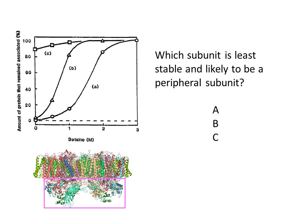 Which subunit is least stable and likely to be a peripheral subunit