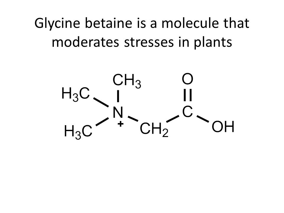 Glycine betaine is a molecule that moderates stresses in plants