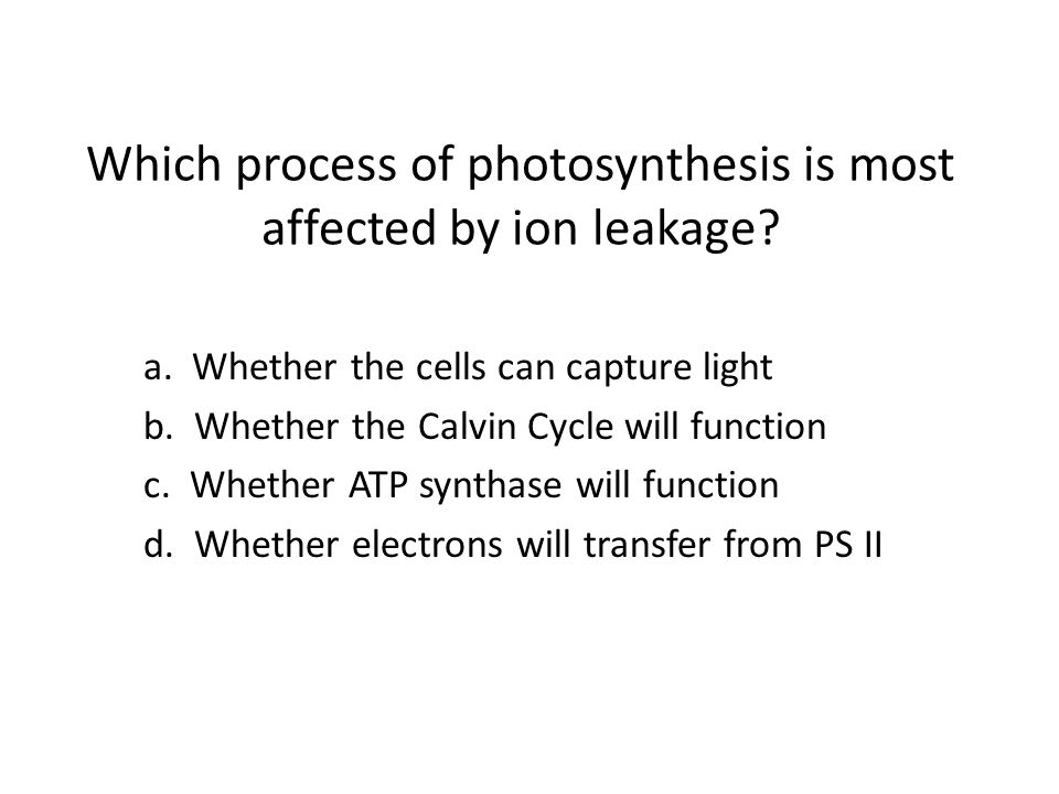 Which process of photosynthesis is most affected by ion leakage