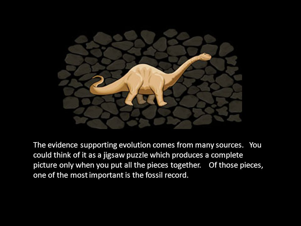The evidence supporting evolution comes from many sources