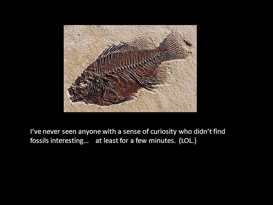 I've never seen anyone with a sense of curiosity who didn't find fossils interesting… at least for a few minutes.