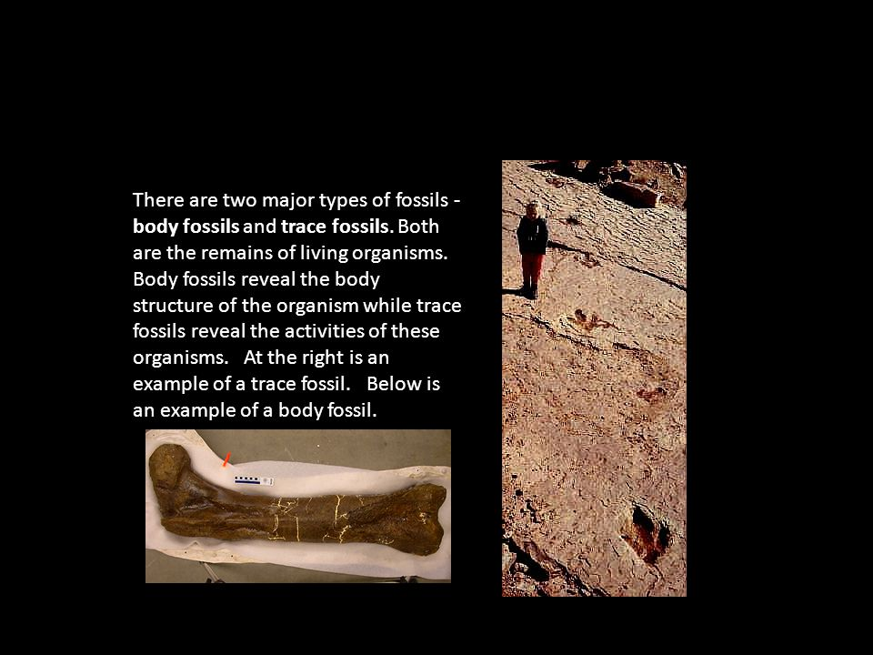 There are two major types of fossils - body fossils and trace fossils