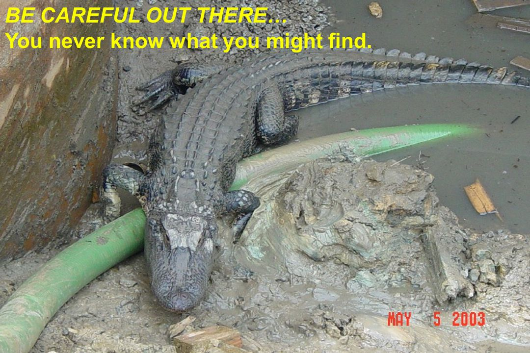 BE CAREFUL OUT THERE… You never know what you might find.