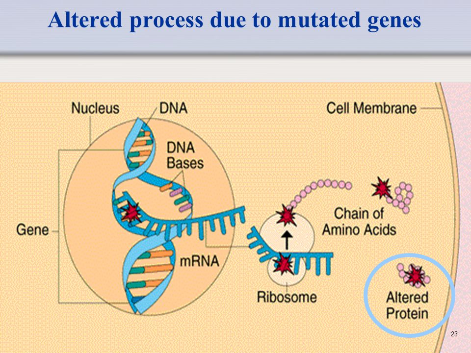 Altered process due to mutated genes