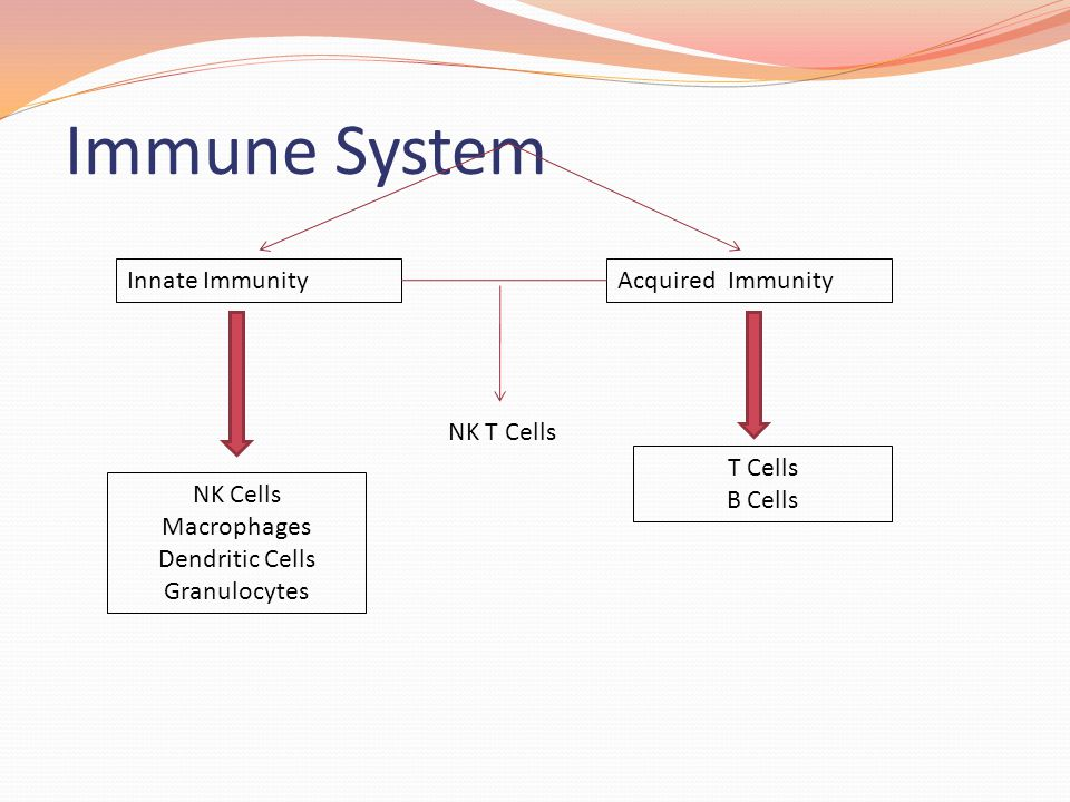 Immune System Innate Immunity Acquired Immunity NK T Cells T Cells