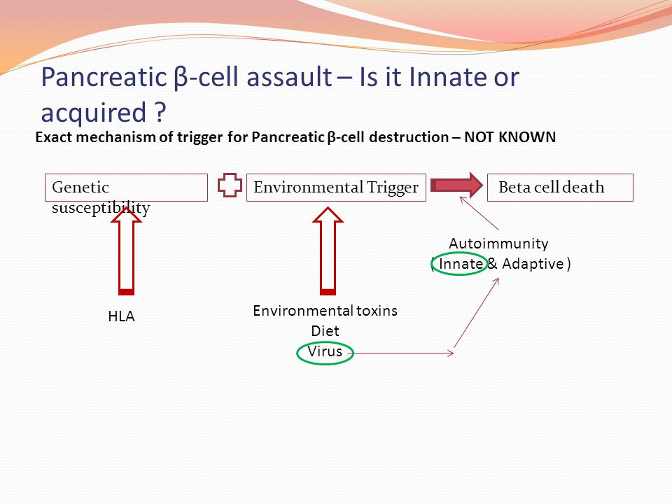Pancreatic β-cell assault – Is it Innate or acquired