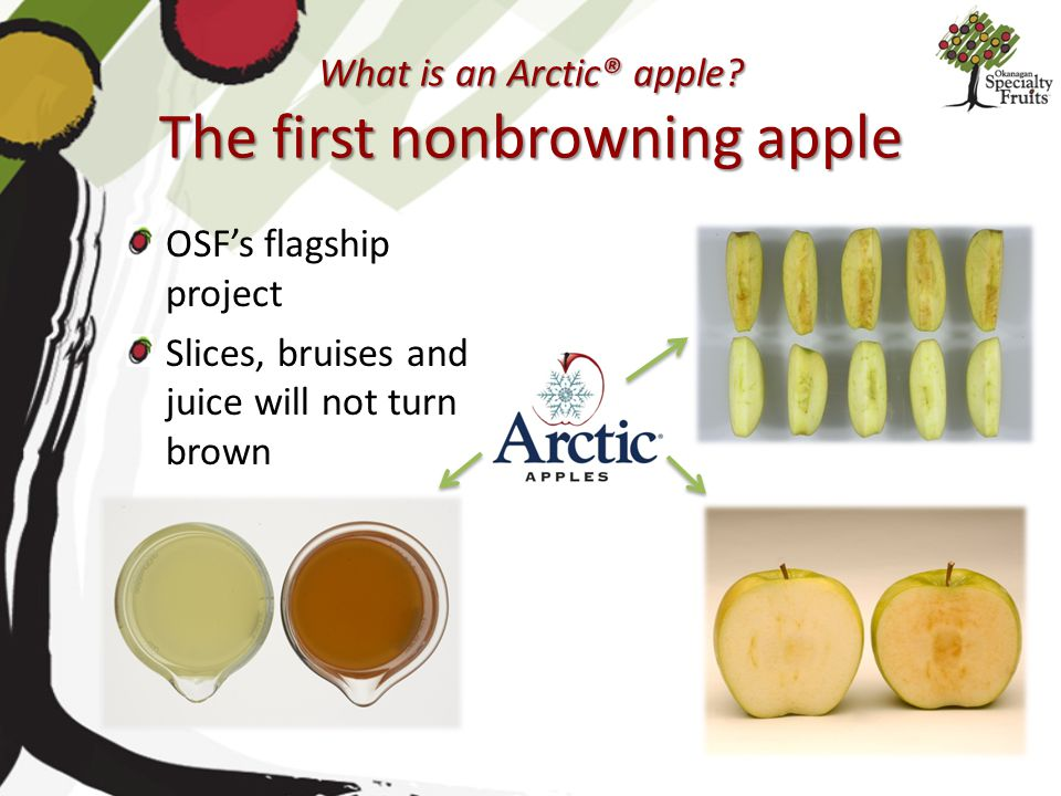 What is an Arctic® apple The first nonbrowning apple