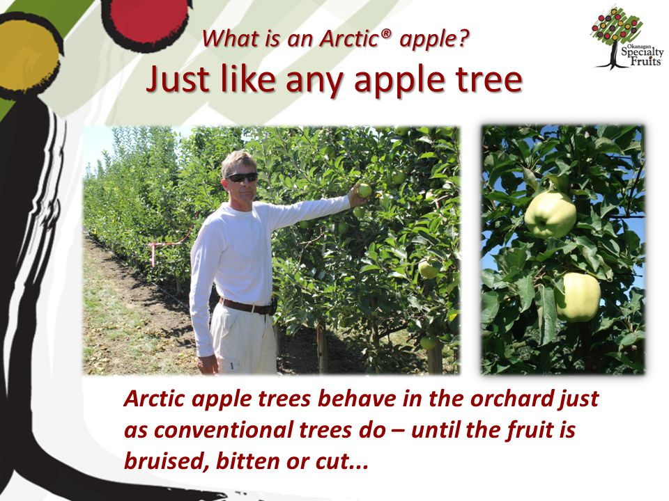 What is an Arctic® apple Just like any apple tree