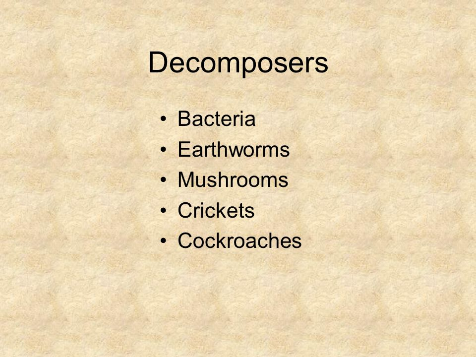 Decomposers Bacteria Earthworms Mushrooms Crickets Cockroaches