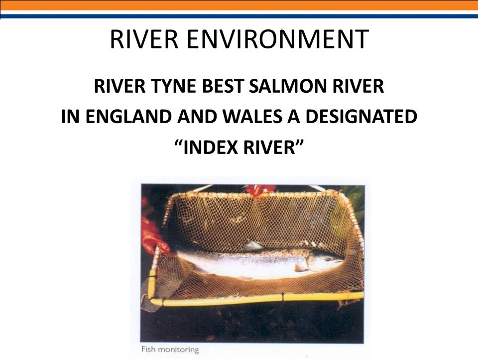 RIVER TYNE BEST SALMON RIVER IN ENGLAND AND WALES A DESIGNATED