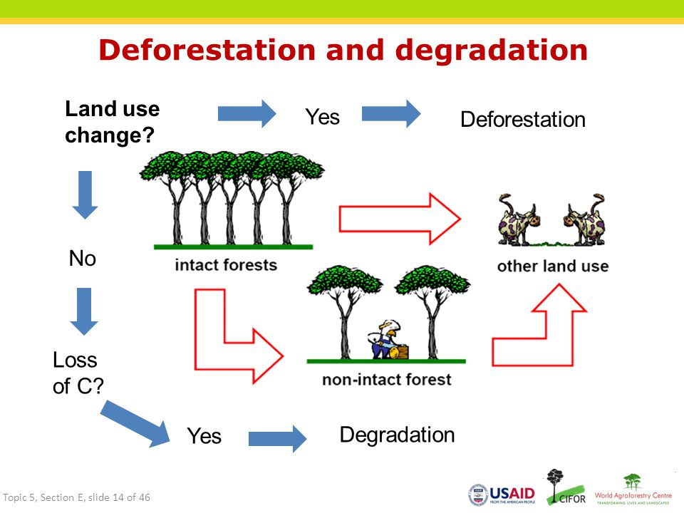Deforestation and degradation