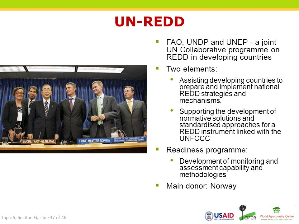 UN-REDD FAO, UNDP and UNEP - a joint UN Collaborative programme on REDD in developing countries. Two elements: