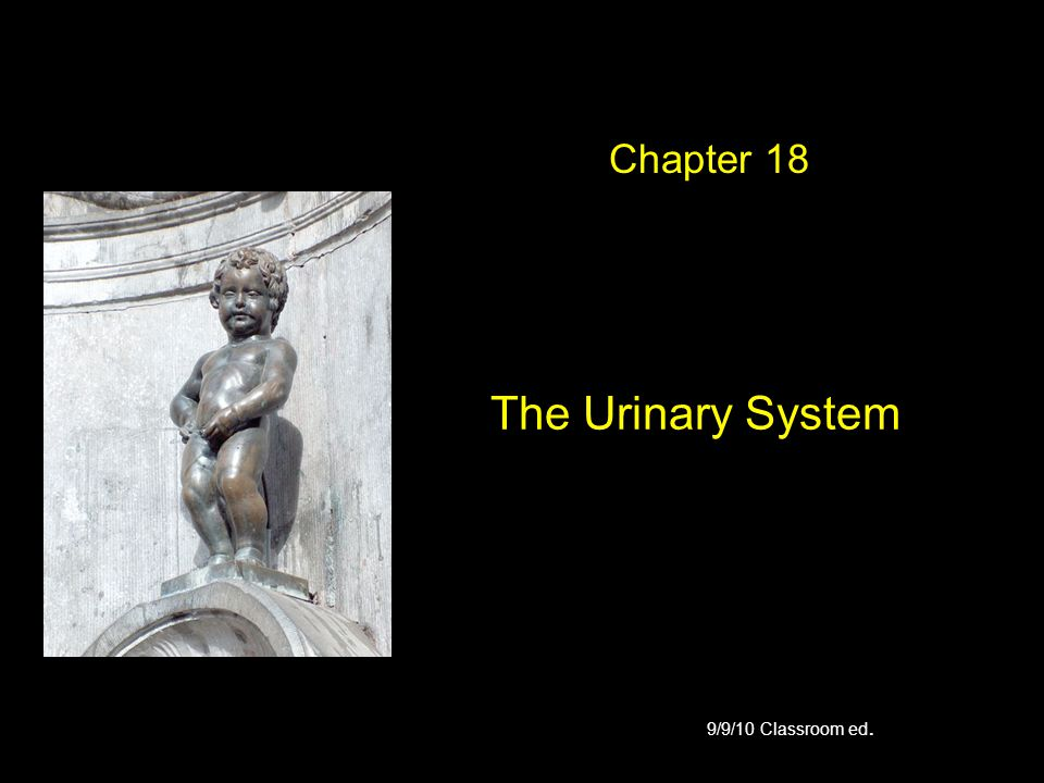 Chapter 18 The Urinary System 9/9/10 Classroom ed.