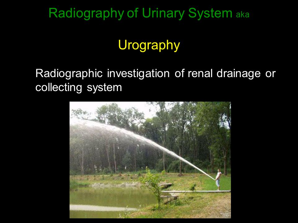 Radiography of Urinary System aka Urography