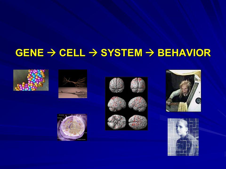 GENE  CELL  SYSTEM  BEHAVIOR
