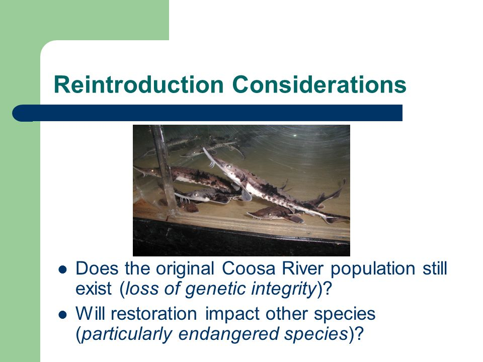 Reintroduction Considerations