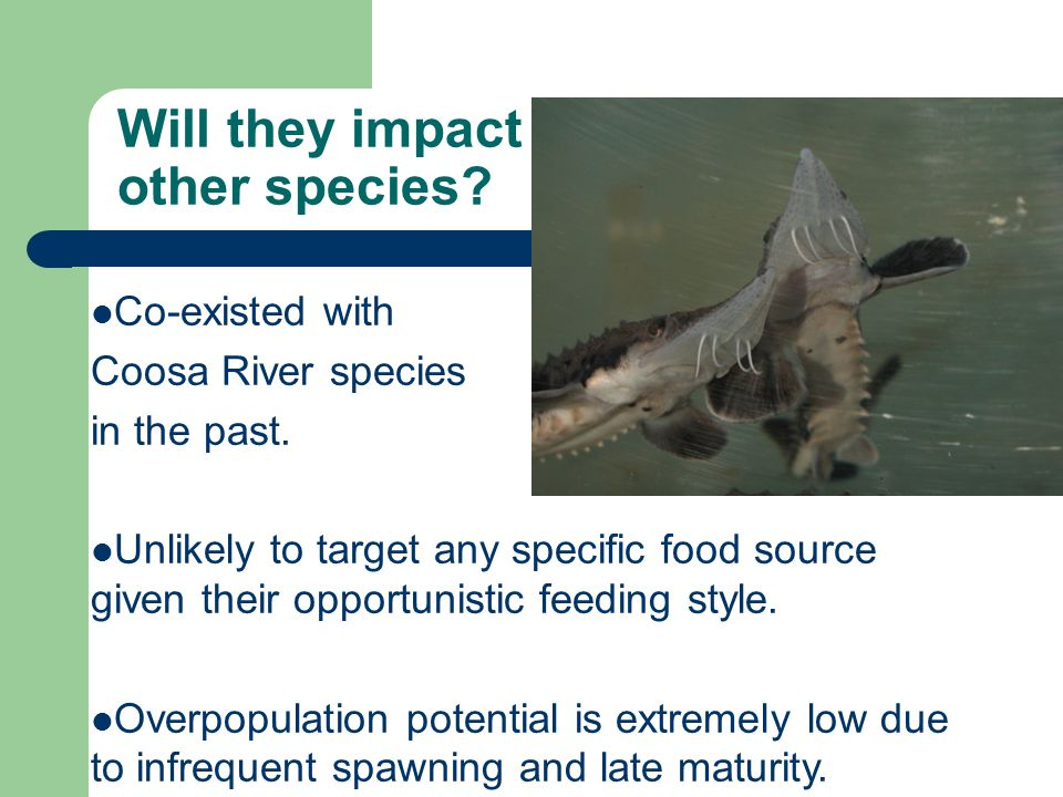 Will they impact other species