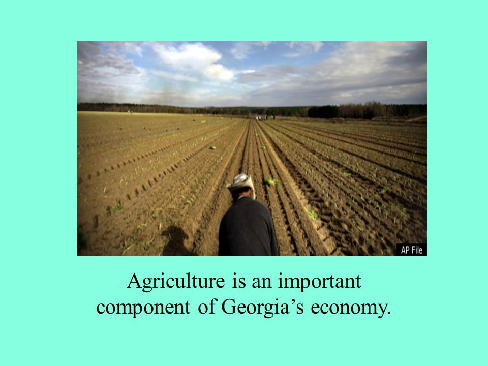Agriculture is an important component of Georgia's economy.