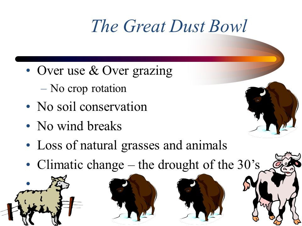 The Great Dust Bowl Over use & Over grazing No soil conservation