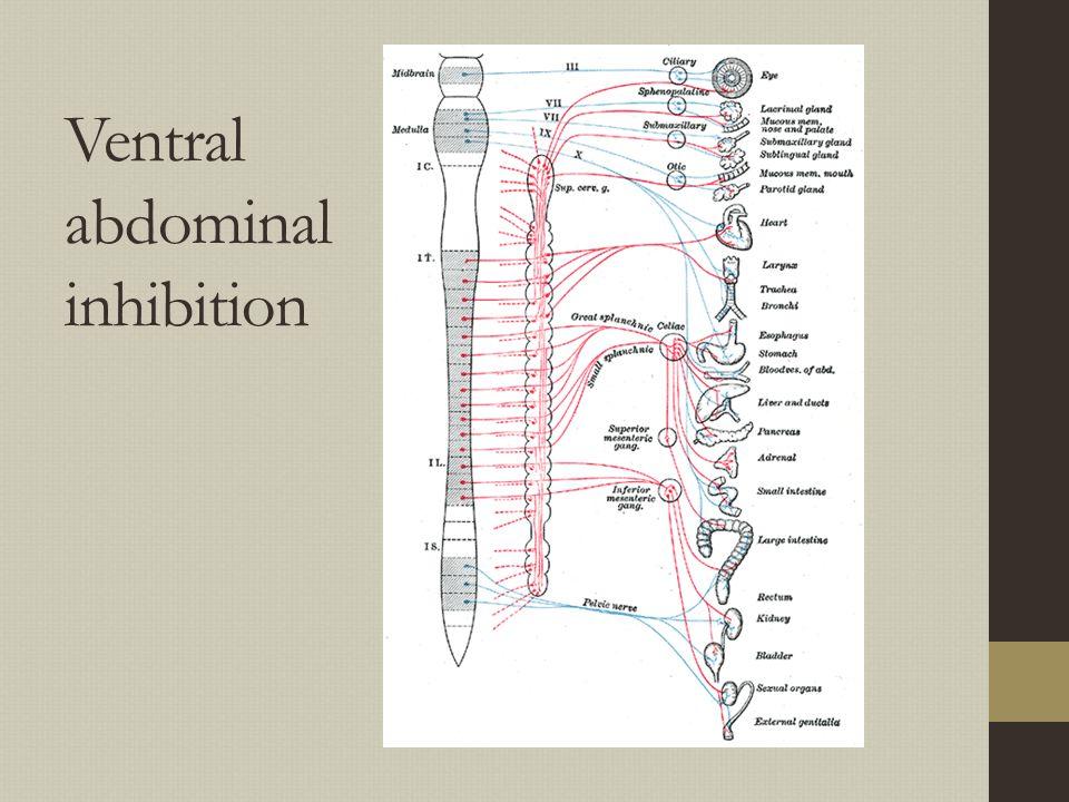 Ventral abdominal inhibition