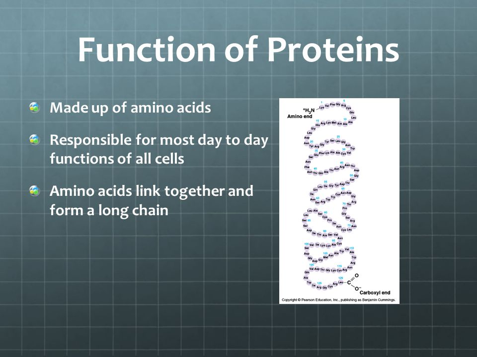 Function of Proteins Made up of amino acids