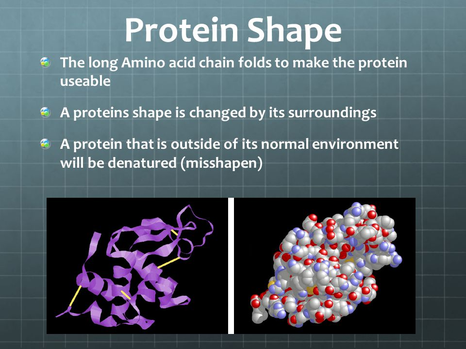 Protein Shape The long Amino acid chain folds to make the protein useable. A proteins shape is changed by its surroundings.
