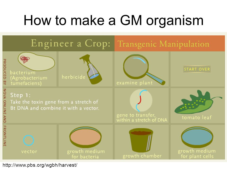 How to make a GM organism