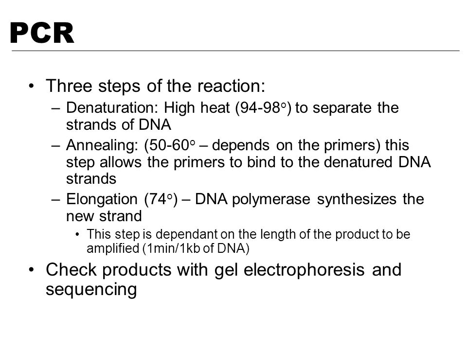 PCR Three steps of the reaction: