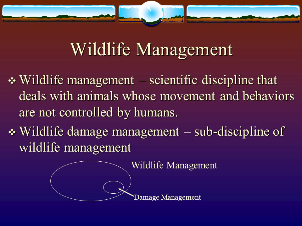 Wildlife Management Wildlife management – scientific discipline that deals with animals whose movement and behaviors are not controlled by humans.