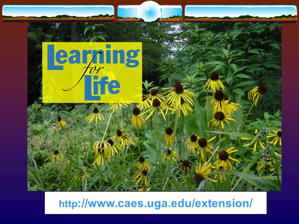 2. UGA Cooperative Extension Web address