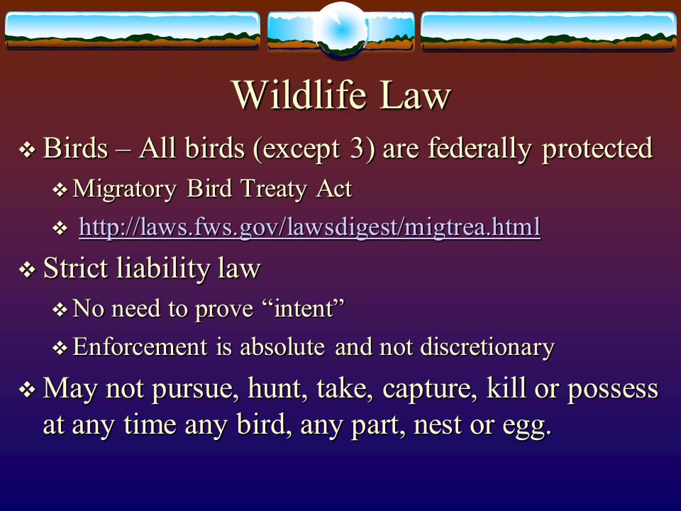 Wildlife Law Birds – All birds (except 3) are federally protected