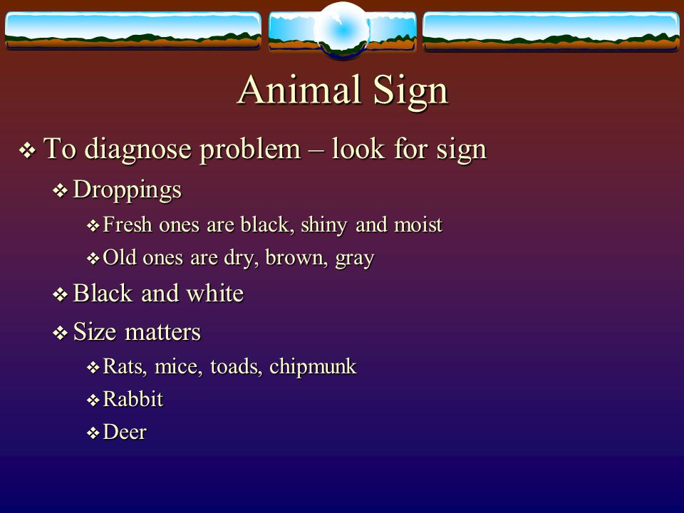 Animal Sign To diagnose problem – look for sign Droppings