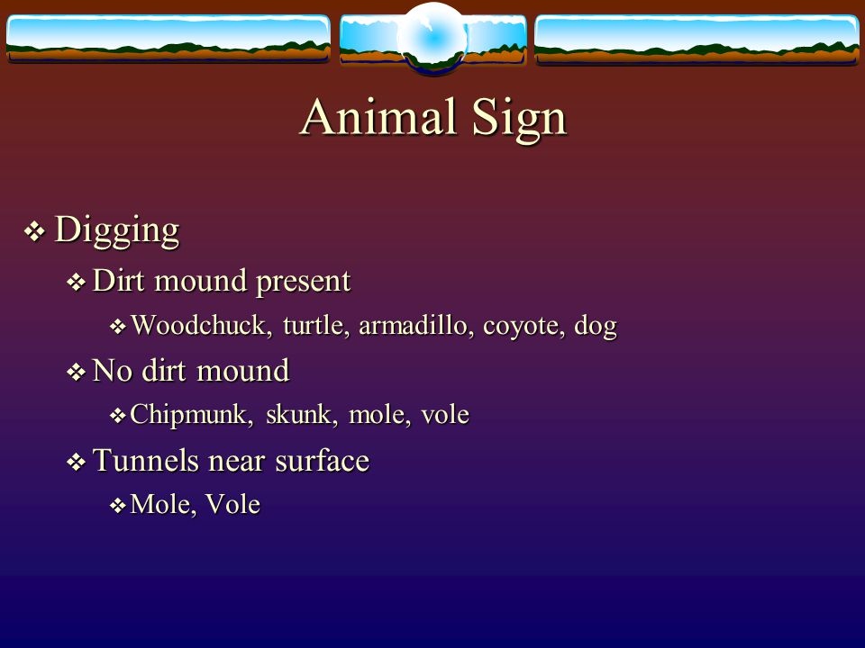 Animal Sign Digging Dirt mound present No dirt mound