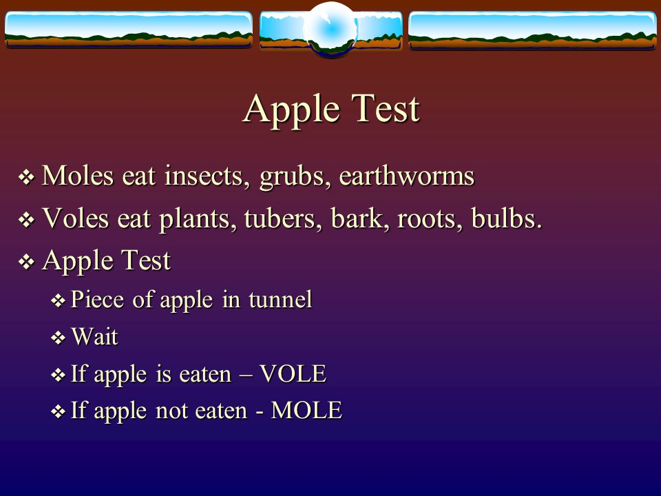 Apple Test Moles eat insects, grubs, earthworms