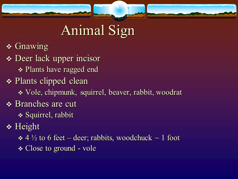 Animal Sign Gnawing Deer lack upper incisor Plants clipped clean