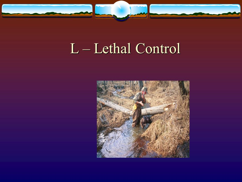 L – Lethal Control 64. Lethal control is often a last resort as shown here for beaver removal.