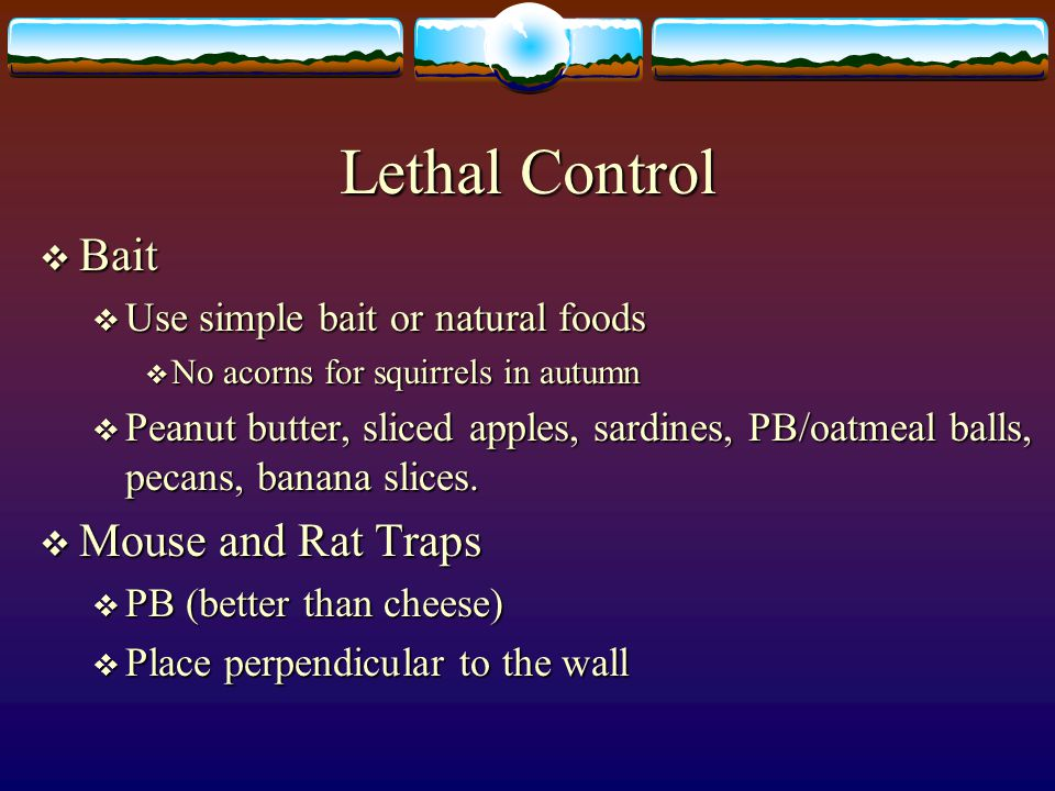 Lethal Control Bait Mouse and Rat Traps