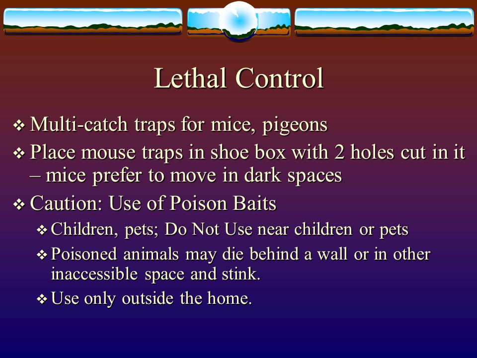Lethal Control Multi-catch traps for mice, pigeons