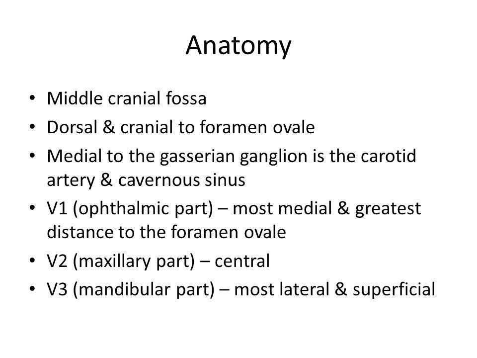 Anatomy Middle cranial fossa Dorsal & cranial to foramen ovale