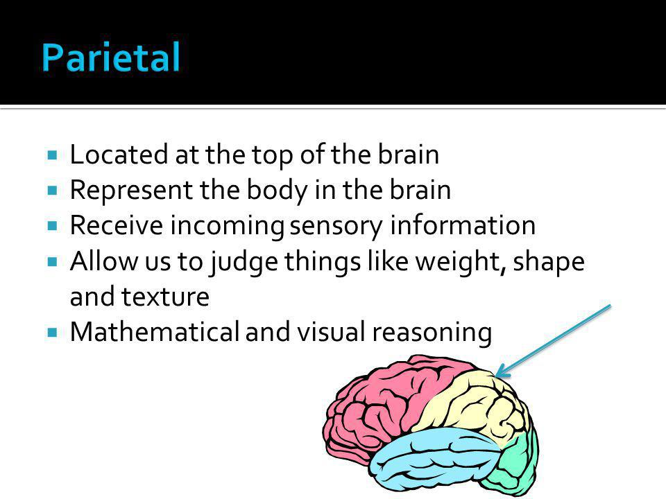 Parietal Located at the top of the brain