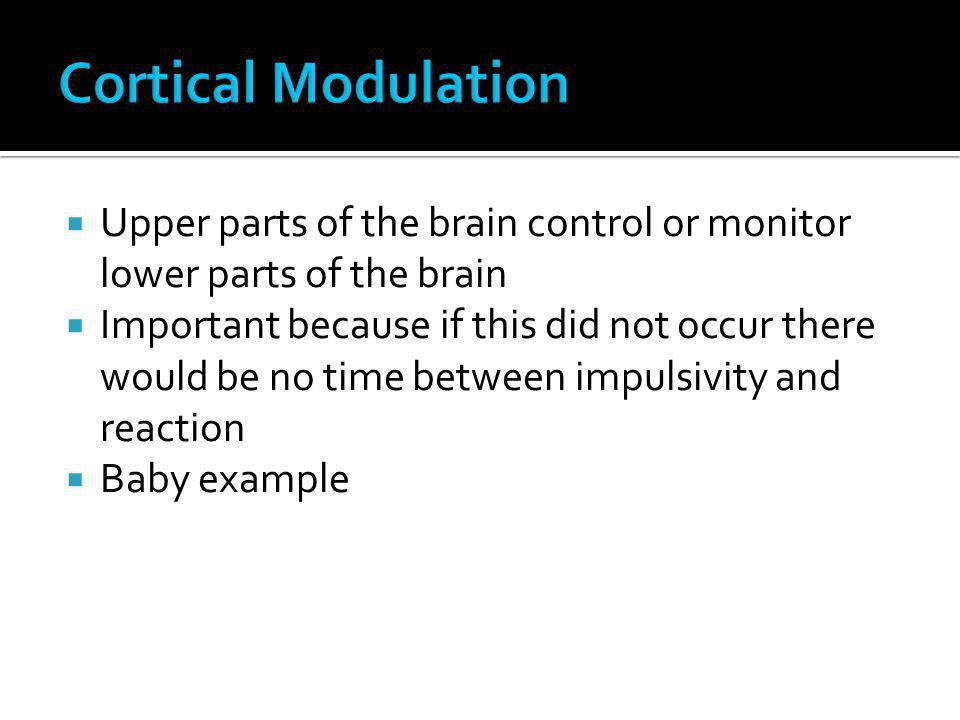 Cortical Modulation Upper parts of the brain control or monitor lower parts of the brain.