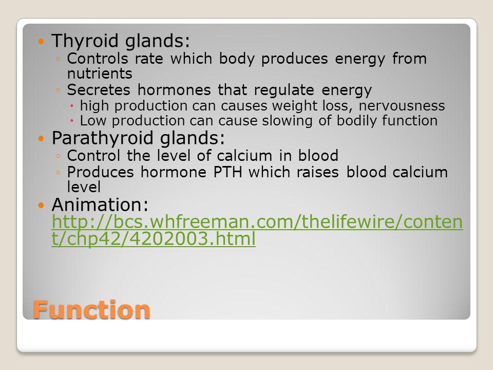 Function Thyroid glands: Parathyroid glands: