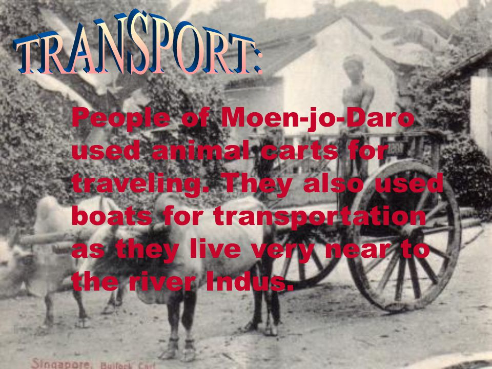 TRANSPORT: People of Moen-jo-Daro used animal carts for traveling.