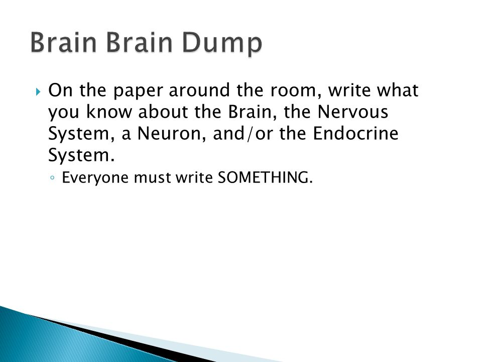 Brain Brain Dump On the paper around the room, write what you know about the Brain, the Nervous System, a Neuron, and/or the Endocrine System.