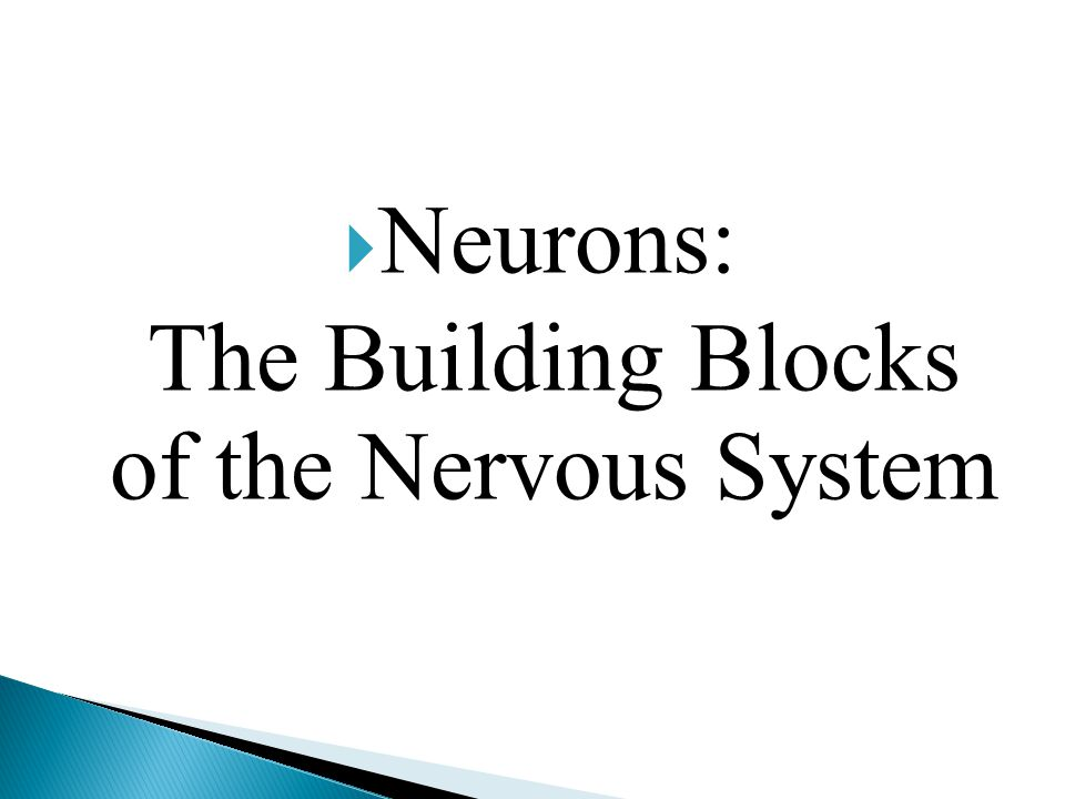 Neurons: The Building Blocks of the Nervous System