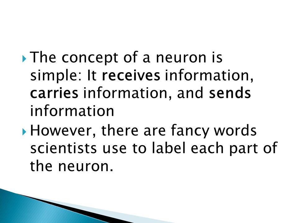 The concept of a neuron is simple: It receives information, carries information, and sends information