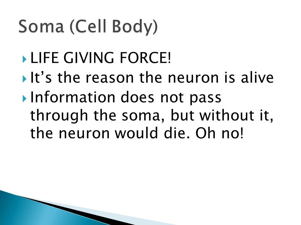 Soma (Cell Body) LIFE GIVING FORCE!