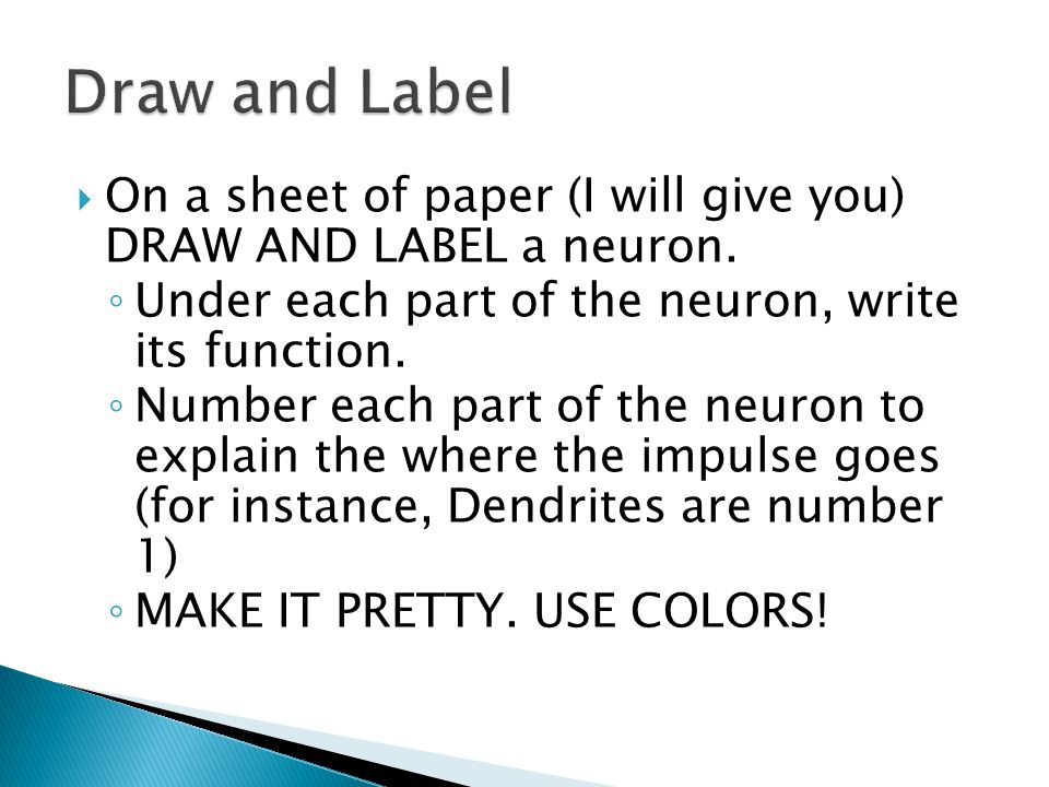 Draw and Label On a sheet of paper (I will give you) DRAW AND LABEL a neuron. Under each part of the neuron, write its function.
